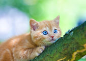 Kitten sitting on the tree — Stock Photo