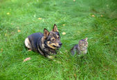 Cat and dog sitting together on the grass — Stock Photo