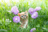 Cute little kitten sitting in flower meadow — ストック写真