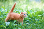 Adorable kitten walking outdoors — ストック写真