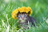 Cute little kitten crowned with a chaplet of dandelion walking on the grass — Stockfoto