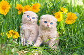 Cute little kittens sitting in flower meadow — Stockfoto