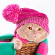 Stock Photo: Cat wearing a hat and a scarf