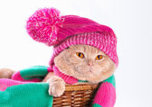 Cat wearing a hat and a scarf — Stock Photo