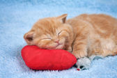 Little kitten sleeping — Stock Photo
