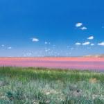 Beautiful pink mud lake — Stock Photo #39361825
