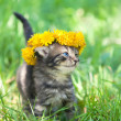 Cute little kitten — Stock Photo #39362241