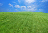 Green lawn with blue sky with clouds — Stock Photo