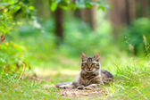 Beautiful cat relaxing outdoors — Stock Photo
