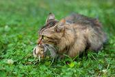 Cat hunted a bird — Stock Photo
