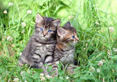 Two little kittens sitting on the grass — Stok fotoğraf