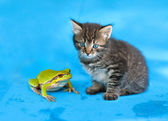Little kitten and frog looking at camera — Stockfoto