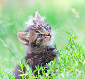 Dandelion seeds on kittens head — Foto de Stock
