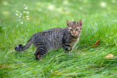Cat staying in a tall grass — Stok fotoğraf