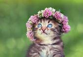 Portrait of cute little kitten — Zdjęcie stockowe