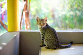 Cat sitting at the balcony — Stockfoto