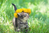 Cute little kitten — Stock Photo