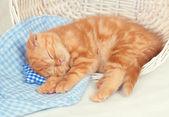 Little kitten sleeping on the small pillow — Stock fotografie