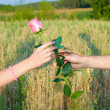 Hands of man giving rose to woman — Foto Stock