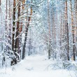 Snowy pine forest in winter — Stock Photo #39625325