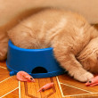 Kittens sleeping after meals in bowl — Stock Photo #39625341