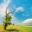 Alone tree in uncultivated field — Stock Photo #39625421