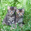 Two little kittens sitting on the grass — Stock Photo