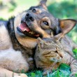 Dog and cat playing together outdoor — Stock Photo #39625865