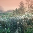 Cobwebby meadow at misty sunrise — Stock Photo #39625867