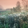 Cobwebby meadow at misty sunrise — Stock Photo