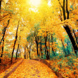 Stock Photo: Autumn road in park strewn with leaves