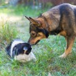 Dog and cat sniffing each other — Stock Photo #39626065