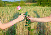 Hands of man giving rose to woman — Stock Photo