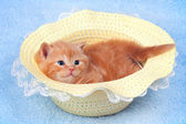 Little kitten lying in straw hat — Stok fotoğraf