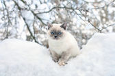 Kočka sedí na sněhu — Stock fotografie
