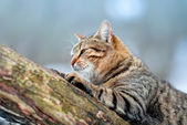 Cat sneaking on a tree — Stock Photo