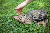 Female hand caressing young cat — Stock Photo