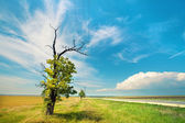 Alone tree in the uncultivated field — Stock Photo