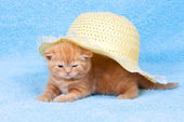 Little kitten sitting under straw hat — Stock fotografie