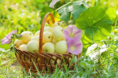Organic apples in a basket on green grass — Stock Photo