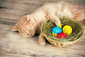 Cat sleeping near the basket with colored eggs — Stock Photo