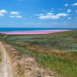 Road to the sea coast and pink mud lake — Stock Photo #40214487