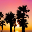 Stock Photo: Tropical beach with palm trees at sunset background