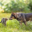 Dog and cat sniffing each other — Stock Photo #40214655
