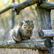 Stock Photo: Cat siting on fence