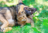 Cat and dog lying together in the lawn — Stok fotoğraf