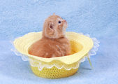 Little cat sitting in the straw hat — 图库照片