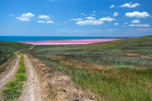 Road to the sea coast and pink mud lake — Stock Photo