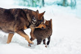 Dog and cat playing together outdoor in the snow — 图库照片