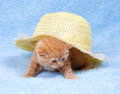 Little kitten sitting under straw hat — Foto Stock